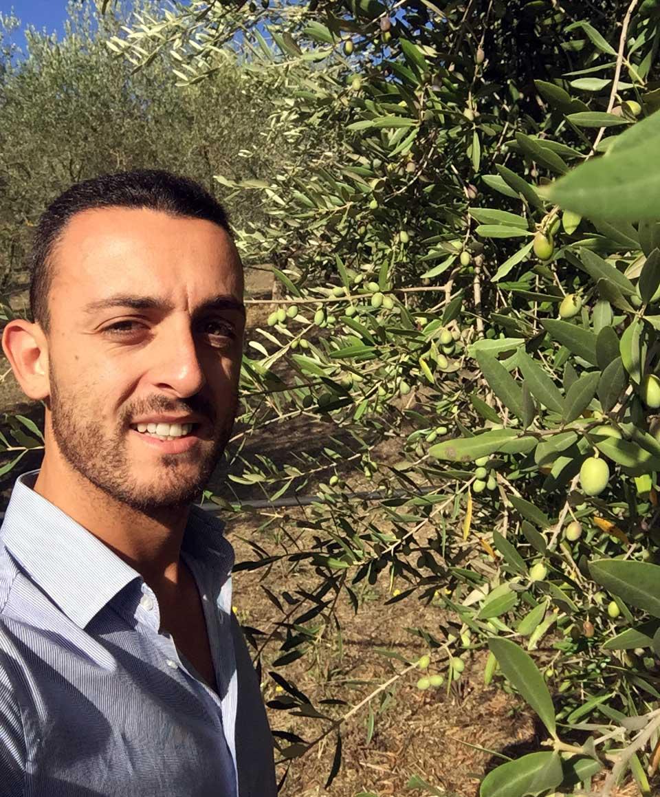 Olive per l'olio extravergine di oliva